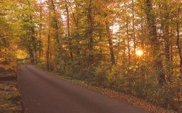 Δάσος φθινοπώρου στο ηλιοβασίλεμα Στοκ φωτογραφία με δικαίωμα ελεύθερης χρήσης
