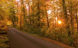 Δάσος φθινοπώρου στο ηλιοβασίλεμα CH Στοκ Εικόνες