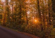 Δάσος φθινοπώρου στο ηλιοβασίλεμα Suisse Στοκ εικόνα με δικαίωμα ελεύθερης χρήσης