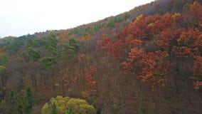 Δάσος φθινοπώρου στο λόφο απόθεμα βίντεο