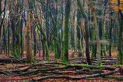 Δάσος φθινοπώρου στο Netherland Στοκ φωτογραφία με δικαίωμα ελεύθερης χρήσης