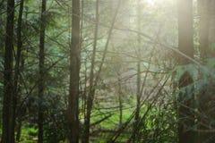 Δάσος φθινοπώρου στο Netherland Στοκ εικόνες με δικαίωμα ελεύθερης χρήσης