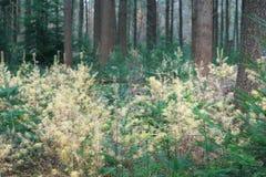 Δάσος φθινοπώρου στο Netherland Στοκ φωτογραφίες με δικαίωμα ελεύθερης χρήσης