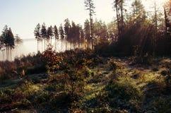Δάσος φθινοπώρου το ηλιόλουστο πρωί Στοκ Φωτογραφία