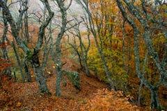 Δάσος 43 φθινοπώρου Στοκ εικόνες με δικαίωμα ελεύθερης χρήσης