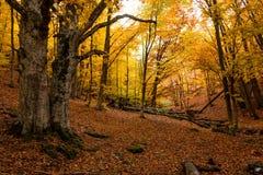 Δάσος 17 φθινοπώρου Στοκ φωτογραφία με δικαίωμα ελεύθερης χρήσης