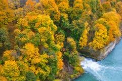 δάσος φθινοπώρου Στοκ φωτογραφία με δικαίωμα ελεύθερης χρήσης
