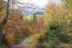 δάσος φθινοπώρου Στοκ Εικόνα