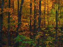 Δάσος φθινοπώρου Στοκ Φωτογραφία