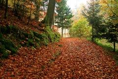 Δάσος φθινοπώρου στοκ φωτογραφίες με δικαίωμα ελεύθερης χρήσης