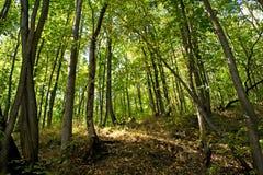 δάσος φθινοπώρου στοκ εικόνες