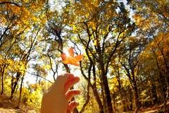 Δάσος φθινοπώρου Στοκ εικόνα με δικαίωμα ελεύθερης χρήσης