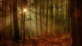 Δάσος φθινοπώρου Enchanted στοκ εικόνα