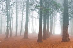 δάσος φθινοπώρου misty Στοκ Εικόνα