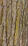 δάσος φλοιών Στοκ εικόνα με δικαίωμα ελεύθερης χρήσης