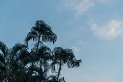 Δάσος φοινικών με το μπλε ουρανό στοκ εικόνα