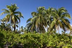 Δάσος φοινικών στοκ φωτογραφία