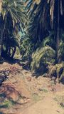 Δάσος φοινικών Στοκ Εικόνα