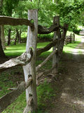 δάσος φραγών Στοκ Φωτογραφίες