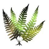 δάσος φτερών Στοκ Εικόνα
