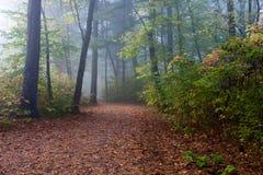 δάσος φυλλώματος φθινο& Στοκ Φωτογραφία