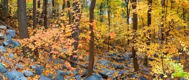 δάσος φυλλώματος φθινο& Στοκ Εικόνα