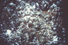 Δάσος φύσης χιονιού χειμερινών τοπίων Στοκ εικόνα με δικαίωμα ελεύθερης χρήσης