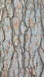 Δάσος φλοιών δέντρων Στοκ φωτογραφία με δικαίωμα ελεύθερης χρήσης