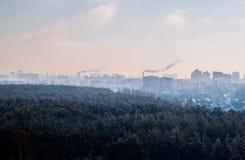Δάσος χειμερινών πεύκων κοντά στο Κίεβο, Ουκρανία στοκ εικόνα