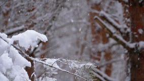 Δάσος χειμερινών πεύκων με τα χιονισμένα χριστουγεννιάτικα δέντρα κλάδων κίνηση αργή φιλμ μικρού μήκους