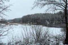 Δάσος, χειμώνας, άσπρο χιόνι, αειθαλή δέντρα, βλάστηση στοκ φωτογραφίες