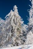 Δάσος χιονιού βουνών Στοκ εικόνα με δικαίωμα ελεύθερης χρήσης