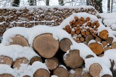 δάσος χιονιού εστιών Στοκ φωτογραφία με δικαίωμα ελεύθερης χρήσης