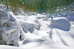 Δάσος χιονιού. στοκ εικόνες