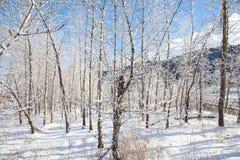 Δάσος χιονιού στοκ εικόνα με δικαίωμα ελεύθερης χρήσης