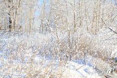 Δάσος χιονιού στοκ φωτογραφίες με δικαίωμα ελεύθερης χρήσης