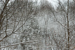 δάσος χιονώδες στοκ φωτογραφία με δικαίωμα ελεύθερης χρήσης