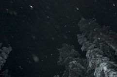 δάσος χιονώδες Στοκ φωτογραφίες με δικαίωμα ελεύθερης χρήσης