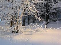 δάσος χιονώδες Στοκ Φωτογραφίες