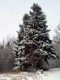 δάσος Χριστουγέννων στοκ εικόνα με δικαίωμα ελεύθερης χρήσης