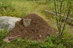 Δάσος λόφων μυρμηγκιών Στοκ φωτογραφία με δικαίωμα ελεύθερης χρήσης