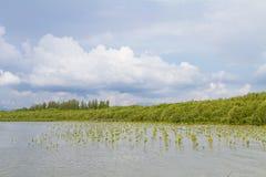 Δάσος όχθεων της λίμνης στοκ εικόνα με δικαίωμα ελεύθερης χρήσης