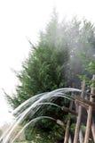 δάσος ύδατος πηγής Στοκ Φωτογραφίες