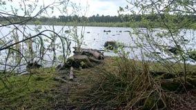 Δάσος δύο Στοκ Φωτογραφία