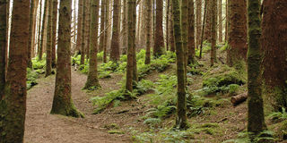δάσος 01 Στοκ Φωτογραφίες