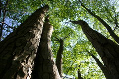 δάσος Στοκ Εικόνες