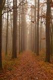 δάσος 3 Στοκ Φωτογραφία