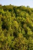 δάσος Στοκ φωτογραφία με δικαίωμα ελεύθερης χρήσης