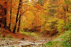 δάσος Στοκ Φωτογραφία