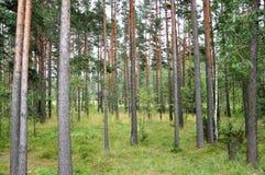 Δάσος Στοκ φωτογραφίες με δικαίωμα ελεύθερης χρήσης